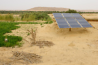 EGYPT, oasis El-Wahat el-Bahariya, desert farming with solar powered pump, field of small scale farmer / AEGYPTEN, Oase Bahariyya, Solar betriebene Pumpe zur Bewaessung eines Feldes eines Kleinbauern