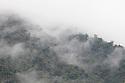 Cloud Forest, Manu Biosphere Reserve, Amazonia, Peru.