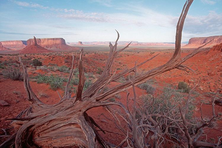 Monument Valley, Utah, Arizona, Four Corners. Southwest, America, U.S.A.,  desert driftwood,