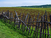 Kulturlandschaft bei. Tschiatura, Imeretien - Imereti;, Georgien, Europa<br /> cultivated landscape near Tschiatura,  Inereti,  Georgia, Europe