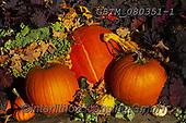 Tom Mackie, STILL LIFE STILLEBEN, NATURALEZA MORTA, photos+++++,GBTM080351-1,#i#, EVERYDAY ,autumn,fall ,pumpkin,pumpkins