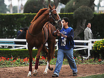 October 16, 2010.Kid Edward riden by David Flores in the paddock before the Oak Tree Derby at Hollywood Park, Inglewood, CA._Cynthia Lum/Eclipse Sportswire.com