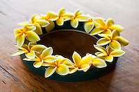 A ring of yellow plumerias