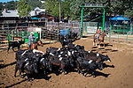 Cutting horses, Benny Brown Arena, Sunday of the 82nd annual Amador County Fair, Plymouth, California, with Destruction Derby, Music and more!<br /> .<br /> .<br /> .<br /> @AmadorCountyFair, #1SmallCountyFair, #VisitAmador, #PlymouthCalifornia, #AmadorCountyFair, #Best4DaysOfSummer, #AmadorCounty, #26thDAA