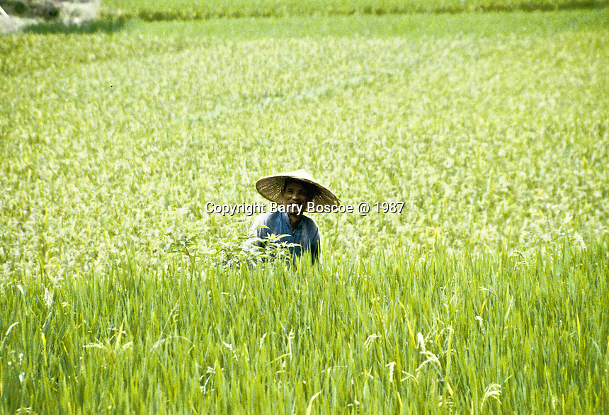 A farmer in his fields of Guilin, China