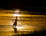 A young child plays along Shell Point Beach in Wakulla County, FL.<br /> ©2013 Mark Wallheiser