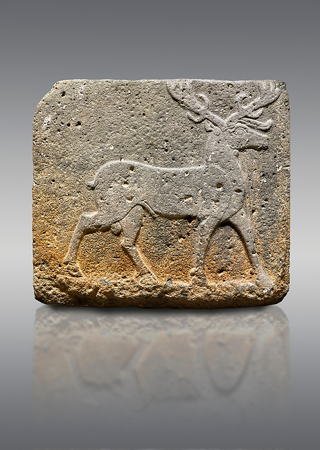 Picture & image of Hittite monumental relief sculpted orthostat stone panel from Water Gate Basalt, Karkamıs, (Kargamıs), Carchemish (Karkemish). 900-700 BC . Stag. Anatolian Civilisations Museum, Ankara, Turkey. With his large and many branched antler, he walks towards the right. <br /> <br /> On a gray background.