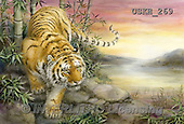 Kayomi, REALISTIC ANIMALS, REALISTISCHE TIERE, ANIMALES REALISTICOS, paintings+++++,USKH269,#A#