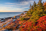 Sunrise lights blueberry bushes  on Ocean Path in Acadia National Park, Downeast, ME, USA