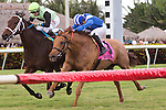 HALLANDALE BEACH, FL - JANUARY 14: #9 Flatlined with jockey Joe Bravo up gets up late in for the win in the G2 Ft. Lauderdale Stakes at Gulfstream Park. (Photo by Arron Haggart/Eclipse Sportswire/Getty Images