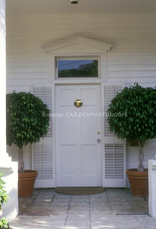Bay Laurel herb standards in terracotta pots planter containers by front door entry, Laurel nobilis