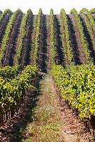 trincadeira vineyard herdade de sao miguel alentejo portugal