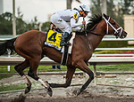 HALLANDALE BEACH, FL - February 3: Audible, #4, enjoys his victory bath after taking the Holy Bull Stakes (Grade II) for trainer Todd Pletcher at Gulfstream Park on February 3, 2018 in Hallandale Beach, FL. (Photo by Carson Dennis/Eclipse Sportswire/Getty Images.)