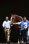 Currency Swap entering the walking ring at Gulfstream Park. Hallandale Beach, Florida. 03-16-2012
