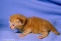 SH31-007z  Cat - kitten learning to crawl