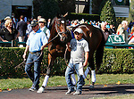October 22, 2015:  Nickname schooling in the paddock during the 3rd race, trained by Steven Asmussen, and owned by LNJ Foxwoods, is entered in the Breeder's Cup 14 Hands Winery Juvenile Fillies. Candice Chavez/ESW/CSM