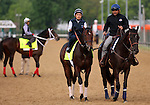 LOUISVILLE, KY - MAY 04: Two Chad Brown trainees enter the track at Churchill Downs, Louisville KY, to prepare for the Kentucky Derby, Shagaf (foreground in yellow saddle towel, Bernardini x Muhaawara, by Unbridled's Song) ridden by Gian Cueva and My Man Sam (background, yellow saddle towel, Unusual Heat x Chelsea Fields, by Bataan) ridden by Daniel Bernardini. Shagaf is owned by Shadwell Stable and My Man Sam by Stein Stables, Inc. (Photo by Mary M. Meek/Eclipse Sportswire/Getty Images)