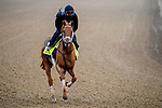 April 25, 2021: Known Agenda, trained by trainer Todd Pletcher, exercises in preparation for the Kentucky Derby at Churchill Downs on April 25, 2021 in Louisville, Kentucky. John Voorhees/Eclipse Sportswire/CSM