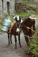 Europe/France/Auvergne/15/Cantal/env de Mandailles: Ane servant a porter les bidons de lait à la laiterie aprés la traite des vaches de race Salers pour la préparation du fromage AOC Cantal [(Photo d'Archive: 1985)