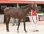 11 September 2010.  Hip #69  Giant's Causeway - Lotta Dancing colt, consigned by Eaton Sales.