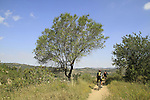 Israel, Jerusalem mountains, the Springs Trail in Aminadav forest