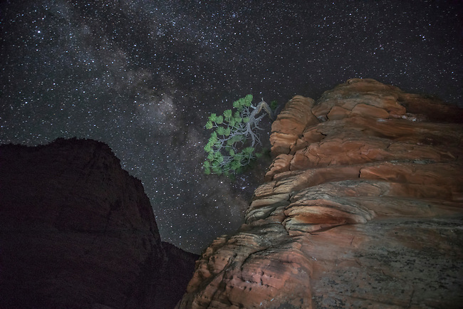 """The Milky Way appears behind the """"Bonsai Tree"""" at Zion National Park, Utah"""