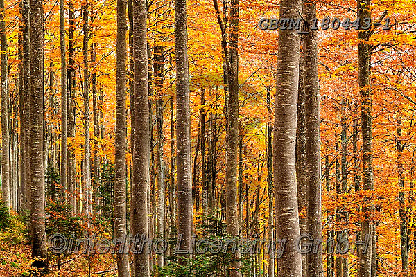Tom Mackie, LANDSCAPES, LANDSCHAFTEN, PAISAJES, photos,+Europa, Europe, European, Slovenia, Tom Mackie, Triglav National Park, autumn, autumnal, beech, color, colorful, colour, colo+urful, destination, destinations, dramatic outdoors, environment, environmental, fall, forest, horizontal, horizontals, lands+cape, landscapes, mood, moody, pine trees, scenery, scenic, tourist attraction, travel, tree, trees, wood, woodland,Europa, E+urope, European, Slovenia, Tom Mackie, Triglav National Park, autumn, autumnal, beech, color, colorful, colour, colourful, de+,GBTM180443-1,#l#, EVERYDAY