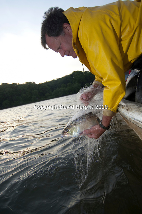 Shad recovery program, Jim Cummins, Potomac River