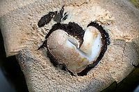 Heart of a Coconut