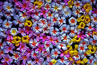 Texture of Flowers in a Spa Bath, Palau, Micronesia