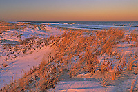 Primary Sand Dunes, native beach grass and Atlantic Ocean, Island Beach State Park, New Jersey