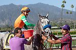 ARCADIA, CA  JUNE 2: #6 Unique Bella, ridden by Mike Smith, gets sponged off after winning the Beholder Mile (Grade l) on June 2, 2018 at Santa Anita Park in Arcadia, CA. (Photo by Casey Phillips/Eclipse Sportswire/Getty Images)