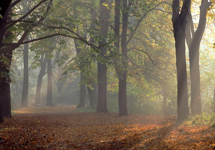 Europe, DEU, Germany, Magdeburg, Autumn, Forest, Fog, Sunrise