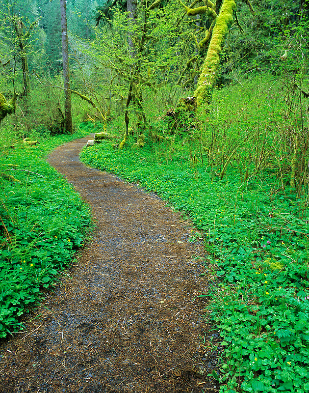 Path with early spring growth. Silver Falls State Park, Oregon