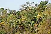 Para state, Brazil. Biodiversity of the Amazon forest.