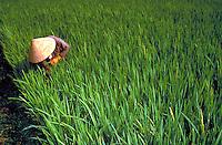 Farm commune worker in rice field in rural northern part of Vietnam. Vietnamese farm worker. Vietnam.
