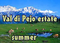 Val di Pejo  - estate. Pejo valley in summer