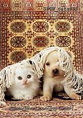 Xavier, ANIMALS, REALISTISCHE TIERE, ANIMALES REALISTICOS, cats, photos+++++,SPCHCATS891,#a#, EVERYDAY