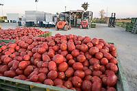 ITALY, Parma, tomato canning company Mutti s.p.a., founded 1899, fresh havested plum tomatoes are processed and conserved as passata direct on the field at the Mutti Insta factory, a mobile conserving unit / ITALIEN, Parma, Basilicanova,Tomatenkonservenhersteller Firma Mutti spa, die frisch geernteten Flaschentomaten werden direkt auf dem Feld in der Insta Factory, einer mobilen Konservierungsanlage, zu Passata verarbeitet, Anlieferung der Tomatenernte durch den Farmer vom Feld nebenan