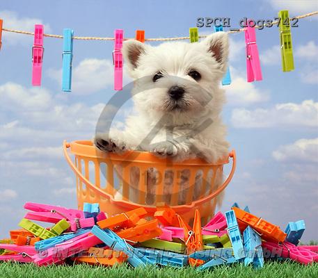 Xavier, ANIMALS, dogs, photos(SPCHdogs742,#A#) Hunde, perros