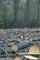 Log Grounds