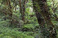 Vegataçao da Mata Atlantica. Piraquara. Parana. Foto de Zig Koch.