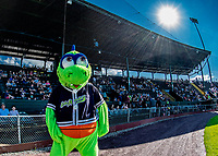 20 June 2021: Vermont Lake Monsters Mascot Champ entertains fans and media alike, prior to a game against the Westfield Starfires at Centennial Field in Burlington, Vermont. The Lake Monsters fell to the Starfires 10-2 at Centennial Field, in Burlington, Vermont. Mandatory Credit: Ed Wolfstein Photo *** RAW (NEF) Image File Available ***