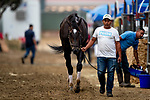 AUGUST 27, 2021: Rock Your world cools out after a gallop at Del Mar Fairgrounds in Del Mar, California on August 27, 2021. Evers/Eclipse Sportswire/CSM