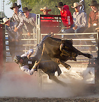 Rodeo Warkworth, 2011