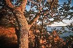 San Juan Islands; Garry Oak, Waldron Island, Point Disney, Nature Conservancy Preserve; Washington State, Pacific Northwest, U.S.A.,