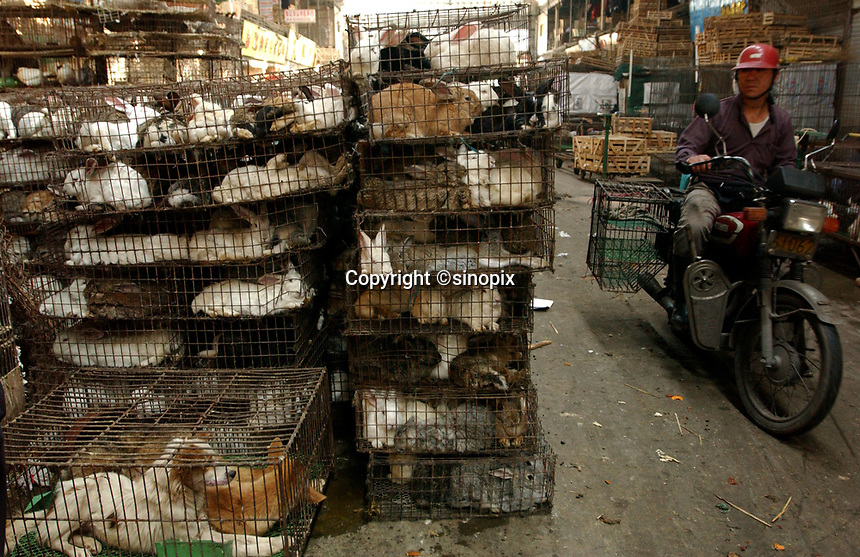 "Guangzhou animal market sells all kinds of animals in terrible conditions and slaughters many at the market in this file photo. China's wild animal markets, where live wild animals and reared animals are sold are the source of many viruses that mutate as they ""jump"" from animals to humans. The coronavirus COVID-19 is thought to have originated in an animal market in China. <br /> By Sinopix Photo Agency"