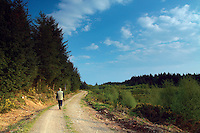Walking through Dalbeattie Forest near Colvend, Galloway<br /> <br /> Copyright www.scottishhorizons.co.uk/Keith Fergus 2011 All Rights Reserved