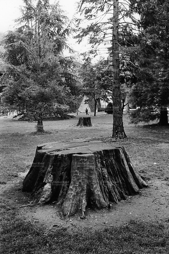 Switzerland. Canton Ticino. Lugano. A lonely man walks in the Parco Ciani. Trunks of trees cut by men. 10.05.10 © 2010 Didier Ruef