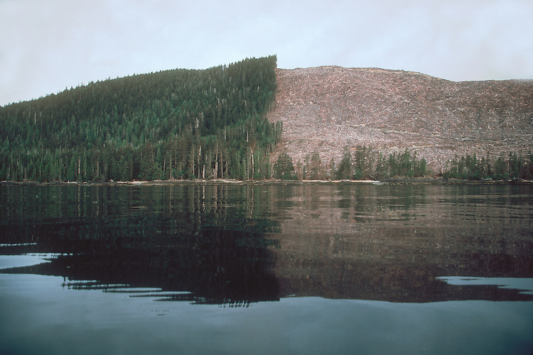 Clear cut, Environmental contrast, old growth forest logging, Queen Charlotte Islands, Haida Gwaii, British Columbia, Canada, South Moresby Island,.